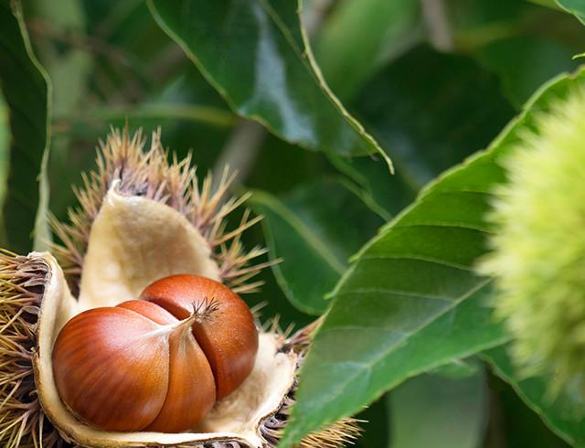 常陸の国茨城の自然に育まれた食材